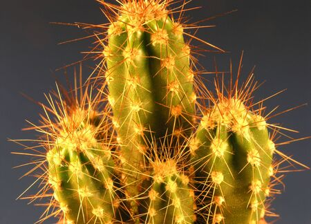 overlightened: A Cactus