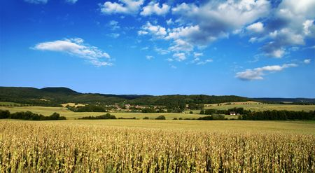 Wide view of poppy field with woods in background and clouds on a blue sky Stock Photo - 5271415