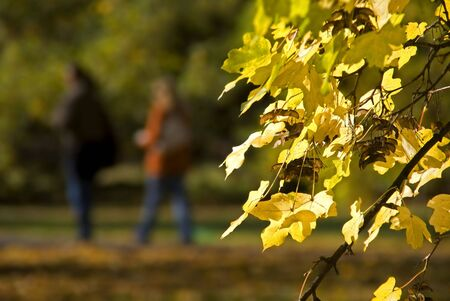 Autumn leaves with blur couple walking in city park in background photo