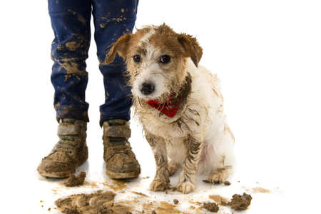 DIRTY DOG AND CHILD. FUNNY JACK RUSSELL AND ITS LITTLE OWNER AFTER PLAY IN A MUD PUDDLE. ISOLATED SHOT AGAINST WHITE BACKGROUND Stock Photo