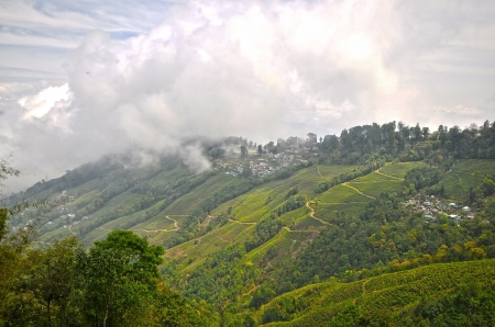 Darjeeling tea is a tea from the Darjeeling district in West Bengal, India