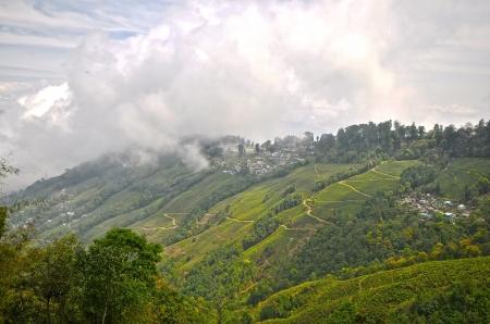 Darjeeling tea is a tea from the Darjeeling district in West Bengal, India