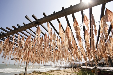 squid hanging to dry in open air