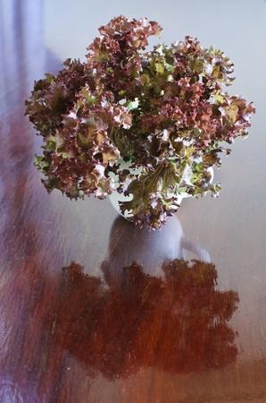 corallo rosso: Fresco corallo rosso foglia di lattuga