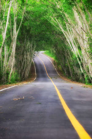 speedway park: Asphalt road with natural tree tunnel in Kaeng Krachan National Park of Thailand with yellow line marking on road surface for separate lanes