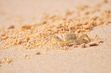 to go up: Ghost crab go up from hole at the beach on sand background, sea life concept and nature idea