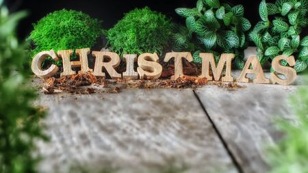 Word of Merry Christmas with plant on wooden background Stock Photo
