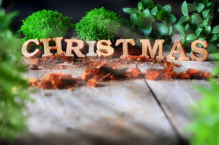 Word of Merry Christmas with plant on wooden background, nature decorative idea Stock Photo