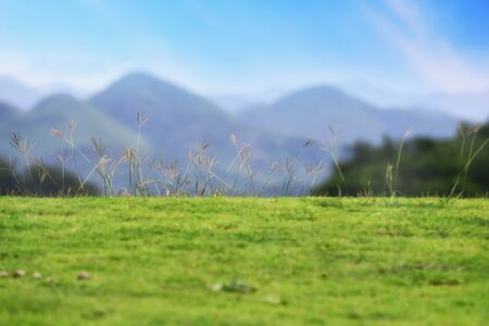 Grass on blur mountain landscape view background, shallow depth of field idea Stock Photo