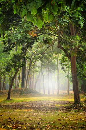 Beautiful mystical forest in the morning, nature background concept