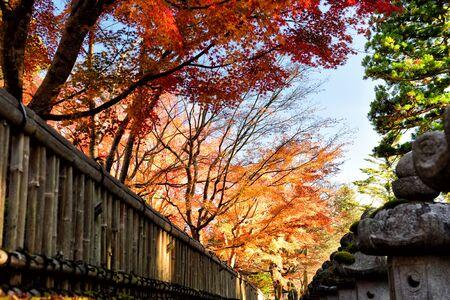 Beautiful forest in autumn season in Koyasan, Japan. Natural background concept
