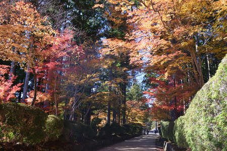 Koyasan, Japan - November 20, 2019: Pathway in the park with tourist at Danjo Garden Complex in Koyasan, Japan