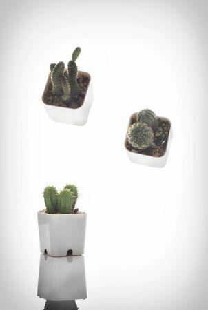 Cactus and succulents plant on white background. Magic Indoor plant concept and natural background idea