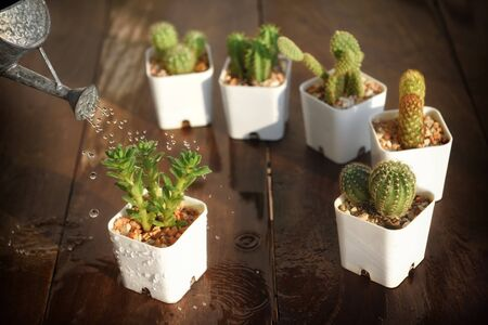 Water green succulents plant on wooden table. Indoor plant concept and natural background idea