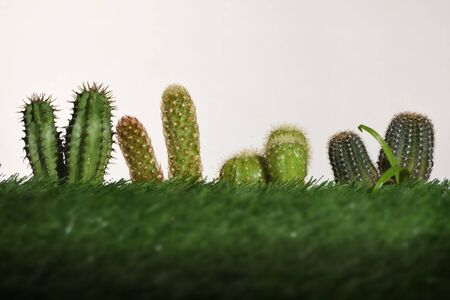 Cactus plant on green grasses background. Indoor plant concept and natural background idea