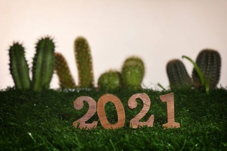 Wooden number 2021 on green grass with cactus and succulents plant background, happy new year concept and natural relaxation idea