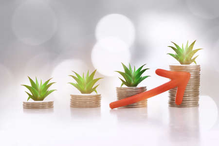 Growing money plant on stack of coins concept. Finance saving and return on investment idea