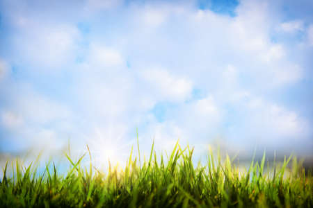 Close-up green grasses on beautiful blue sky with fluffy cloud background. Sustainable business strategy concept and beginning to success idea