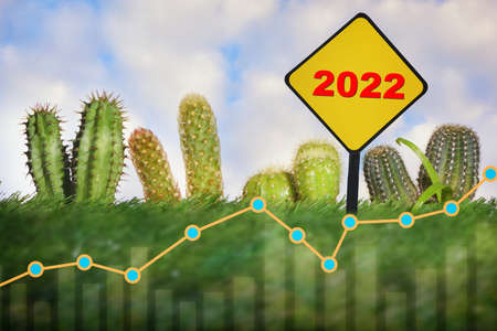 New year 2022 business sustainability growth graph with cactus plant on green grasses background. Economic growth with environment concept and sustainable future ahead idea