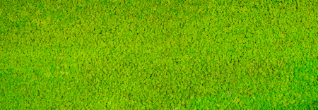 Green carpeted floor background, texture