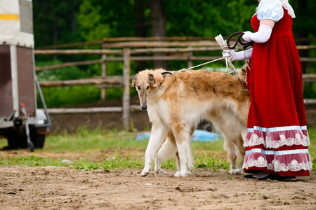 Borzoi Russian Dog