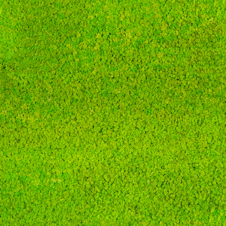 Seamless repeatable green moss pattern background