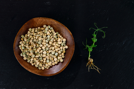 microgreen peas grain and germinated sprout on adark background with copy space Banco de Imagens