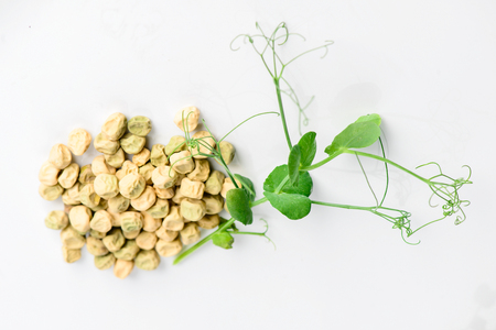 microgreen peas grain and germinated sprout on a light background Banco de Imagens