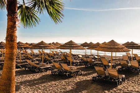 Beach straw umbrellas and palm trees, umbrellas and palm trees on beach in sun, Wooden sunbed on tropical beach at summer day
