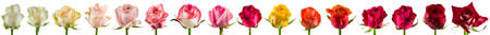 collage of colored roses isolated, set rose buds collection on white background Reklamní fotografie