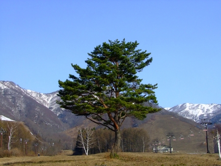 Snow lingering snow Hakuba tsugaike Birch 写真素材 - 103445285