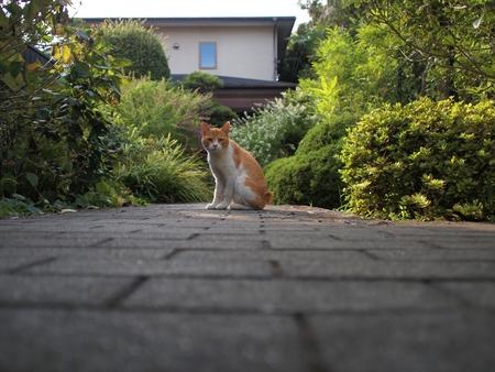 cat on street Banco de Imagens