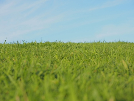 green grass over clear sky