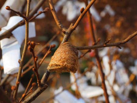 mantis egg on branch
