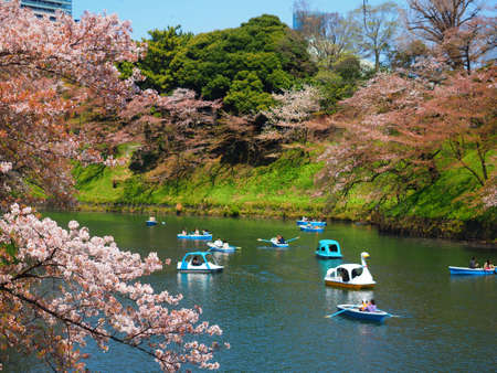 Chiyoda Tokyo/Japan-Apr13,2019:Row and Swan Boat on Chidorigafuchi Goat in Springtime