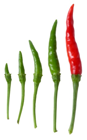 Many size of Thai peppers (bird chilli) isolated on white Stock Photo - 16309379