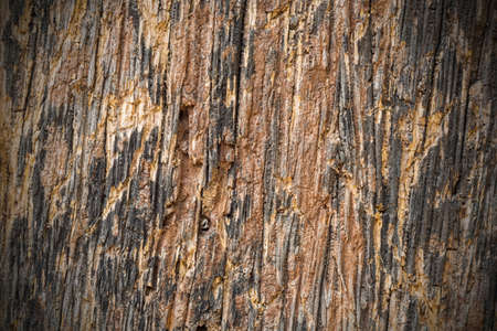 Abstract Old and weathered wood texture Stock Photo - 17304898
