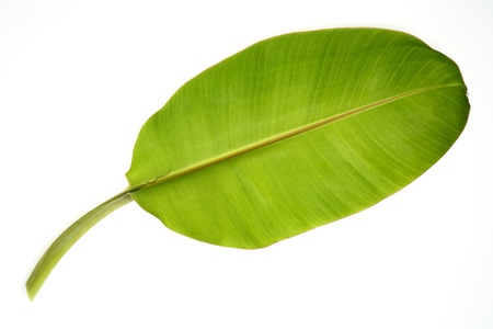 Banana leaf isolated on white photo