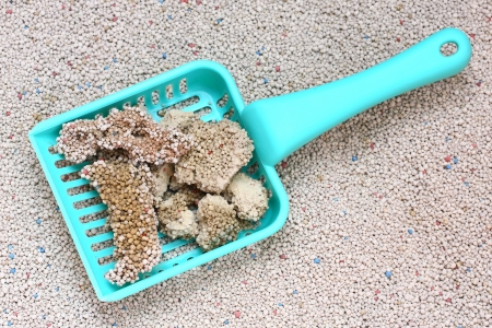 White Sodium Bentonite Cat Litter with cat sand scoop Stock Photo - 17568361