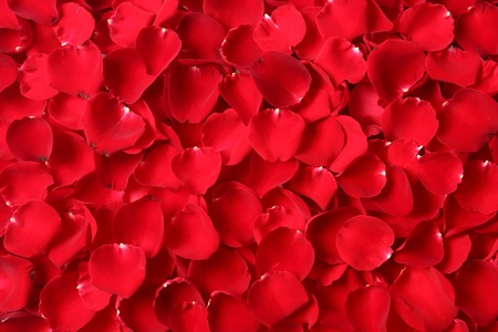 Close up red rose petal background photo