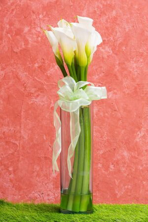White Calla Lily in glass vase with bow tie photo