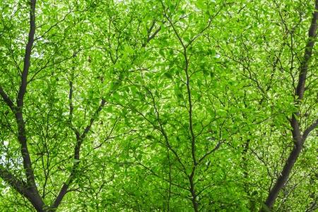Beautiful green tree leaf background against sunlight in forest photo