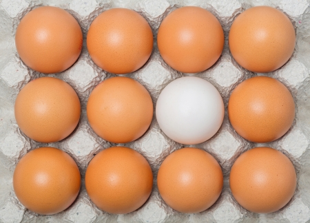 Duck egg among chicken eggs on paper tray photo
