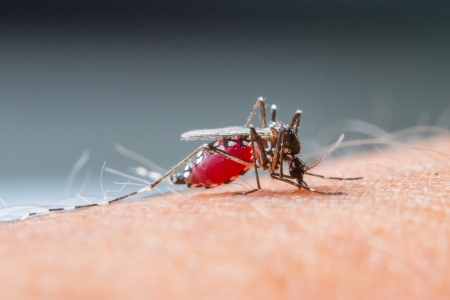 Close up a Mosquito sucking human blood Stock Photo - 18955826