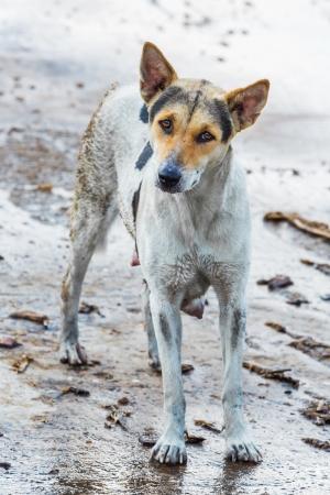 Dirty female dog on wet concrete floor Stock Photo - 19473149