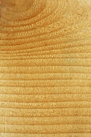 Close up beautiful pine wood texture background photo