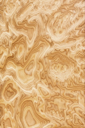 walnut burl: Close up real burl wood grain texture background Stock Photo