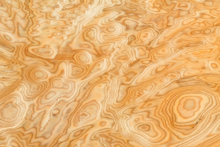 Close up real burl wood grain texture background photo