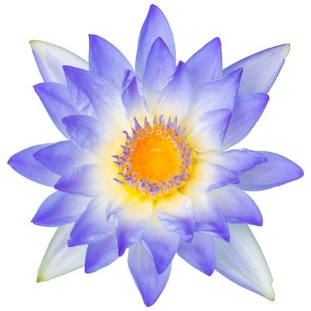 Close-up bloeiende waterlelie of lotusbloem geïsoleerd op wit - met pad