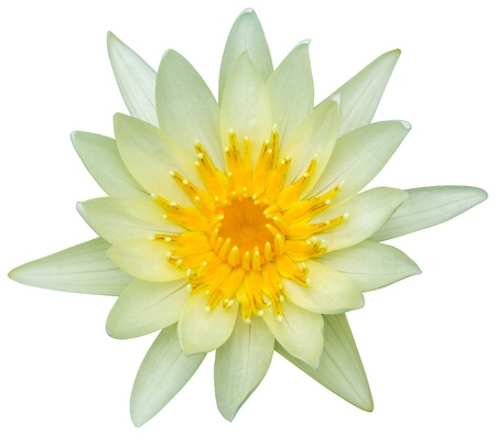 nymphaea: Close up blooming water lily or lotus flower isolated on white - with path Stock Photo